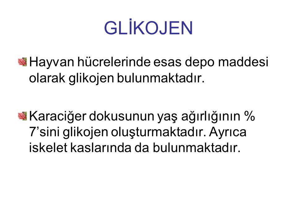 GLİKOJEN Hayvan hücrelerinde esas depo maddesi olarak glikojen bulunmaktadır. Karaciğer dokusunun yaş ağırlığının % 7'sini glikojen oluşturmaktadır. A