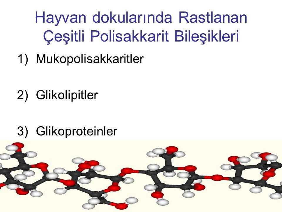 Hayvan dokularında Rastlanan Çeşitli Polisakkarit Bileşikleri 1)Mukopolisakkaritler 2)Glikolipitler 3)Glikoproteinler