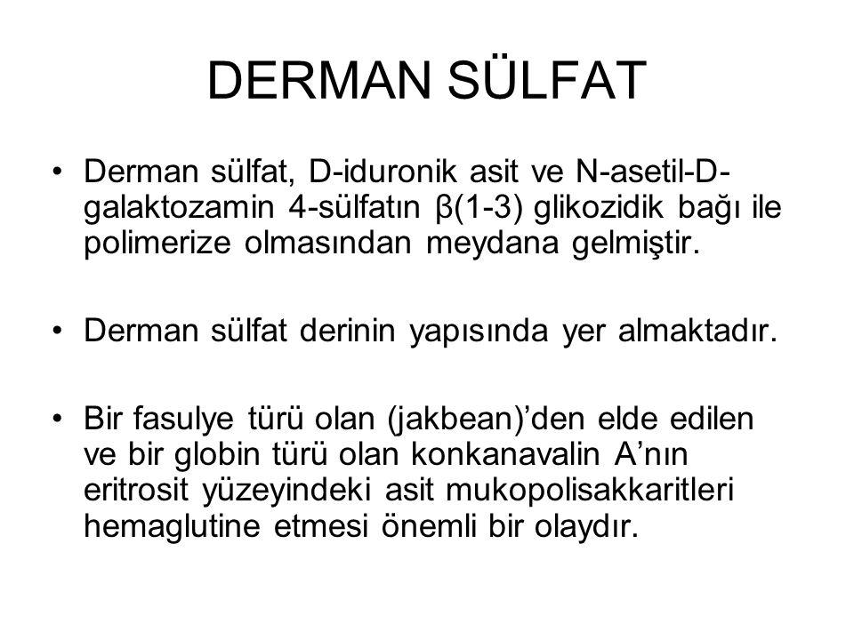 DERMAN SÜLFAT Derman sülfat, D-iduronik asit ve N-asetil-D- galaktozamin 4-sülfatın β(1-3) glikozidik bağı ile polimerize olmasından meydana gelmiştir