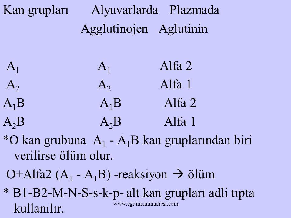 Kan grupları Alyuvarlarda Plazmada Agglutinojen Aglutinin A 1 A 1 Alfa 2 A 2 A 2 Alfa 1 A 1 B A 1 B Alfa 2 A 2 B A 2 B Alfa 1 *O kan grubuna A 1 - A 1 B kan gruplarından biri verilirse ölüm olur.