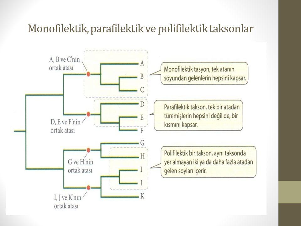Monofilektik, parafilektik ve polifilektik taksonlar