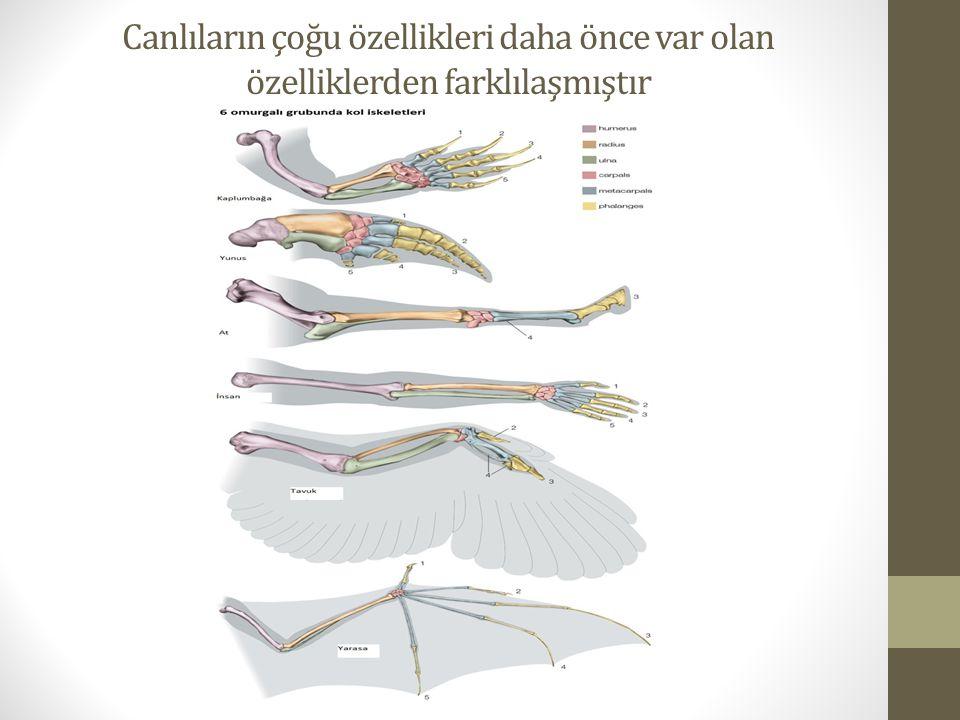 Canlıların çoğu özellikleri daha önce var olan özelliklerden farklılaşmıştır