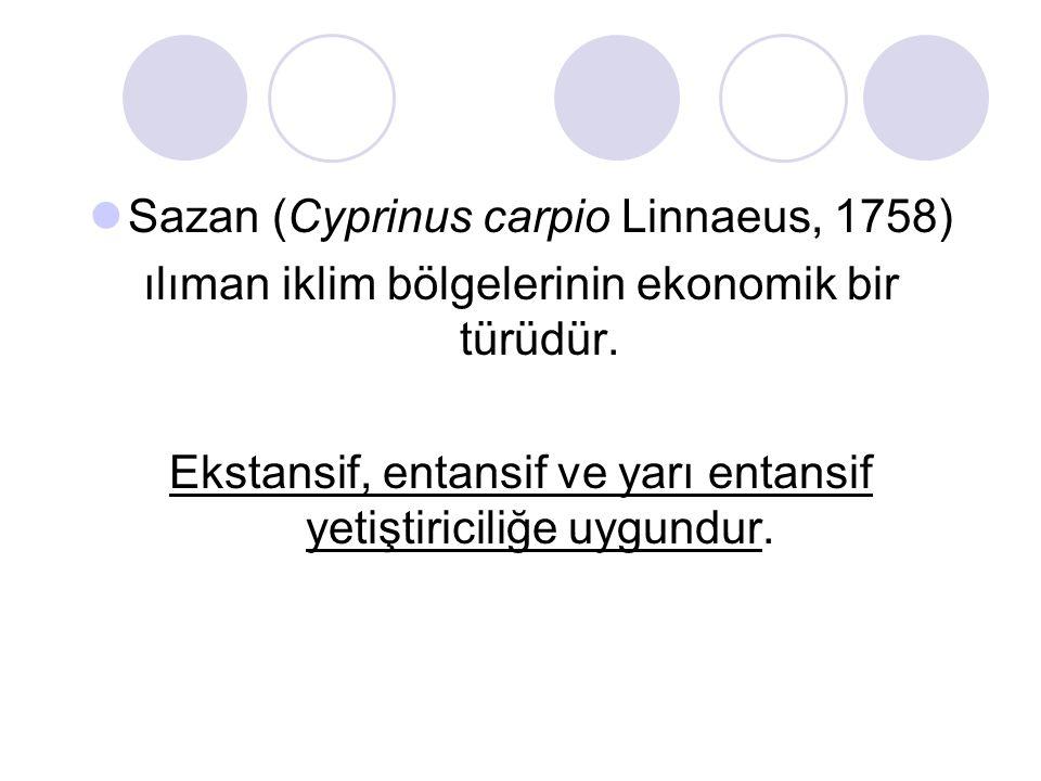 Sazan (Cyprinus carpio Linnaeus, 1758) ılıman iklim bölgelerinin ekonomik bir türüdür.