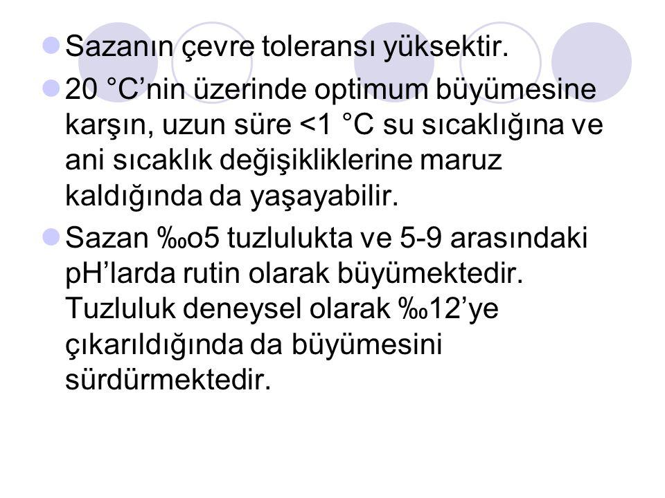 Sazan, Türkiye'nin bütün bölgelerinde bulunan ve içsu balıkları üretimimizin önemli bir kısmını oluşturan türdür.