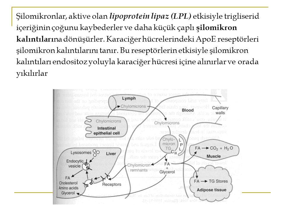 Karaciğerde şilomikron kalıntılarından VLDL'ler oluşur Yakıt olarak hemen gerekenden daha fazla yağ asidi veya karbohidrat bulunduğu durumlarda, karaciğerde yağ asitlerinden veya karbohidratlardan sentezlenen endojen trigliseridlerden de VLDL yapılmaktadır