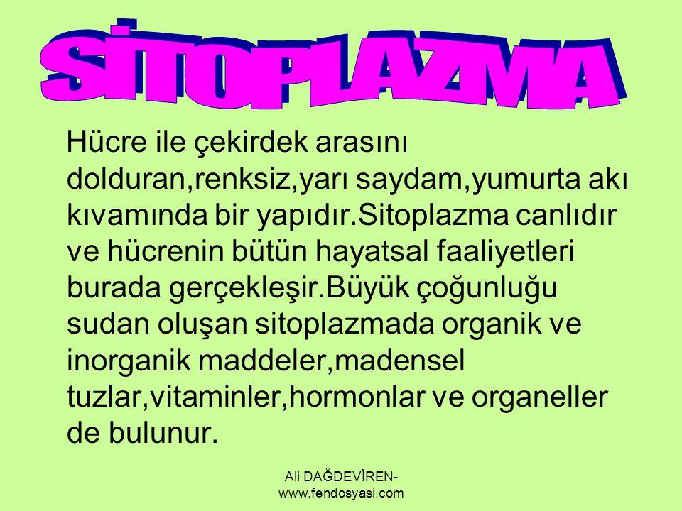 Ali DAĞDEVİREN- www.fendosyasi.com Hücre ile çekirdek arasını dolduran,renksiz,yarı saydam,yumurta akı kıvamında bir yapıdır.Sitoplazma canlıdır ve hü