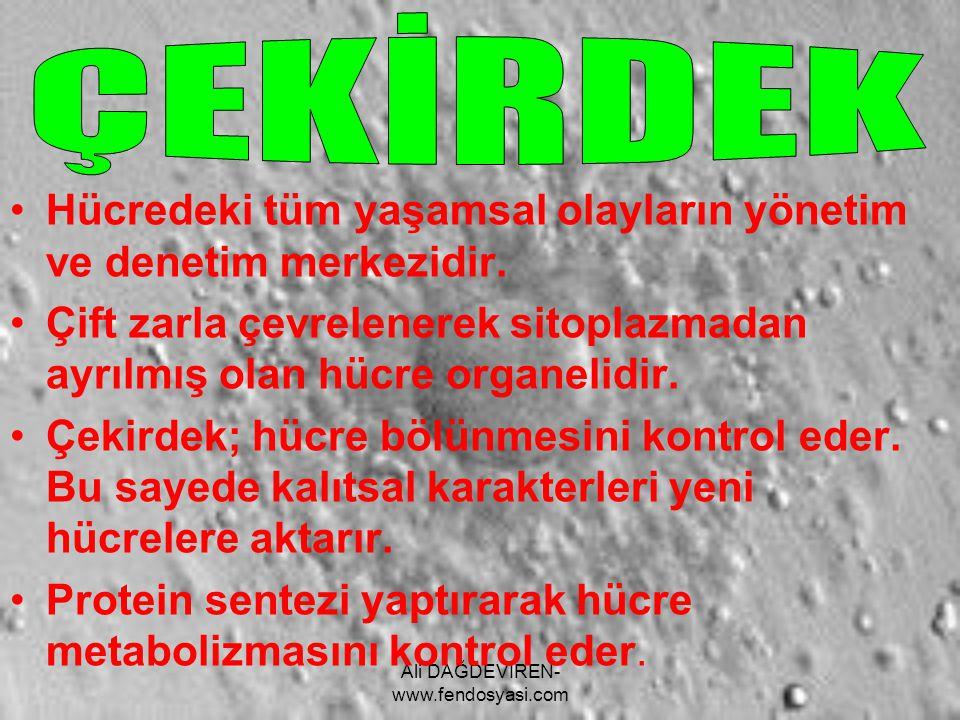 Ali DAĞDEVİREN- www.fendosyasi.com Hücredeki tüm yaşamsal olayların yönetim ve denetim merkezidir. Çift zarla çevrelenerek sitoplazmadan ayrılmış olan