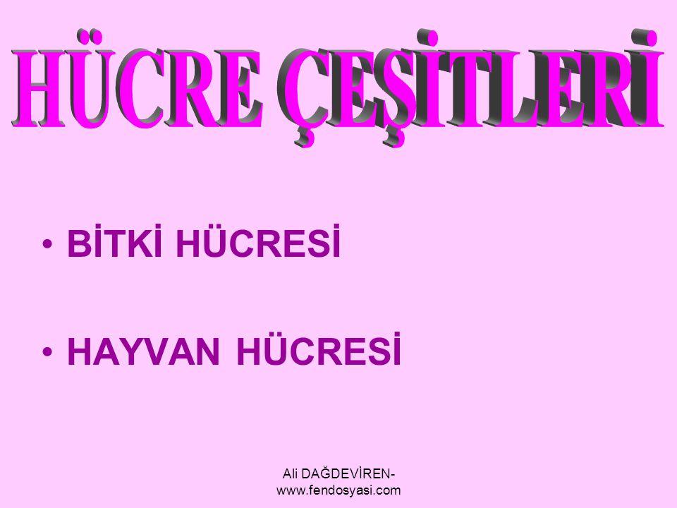 Ali DAĞDEVİREN- www.fendosyasi.com BİTKİ HÜCRESİ HAYVAN HÜCRESİ