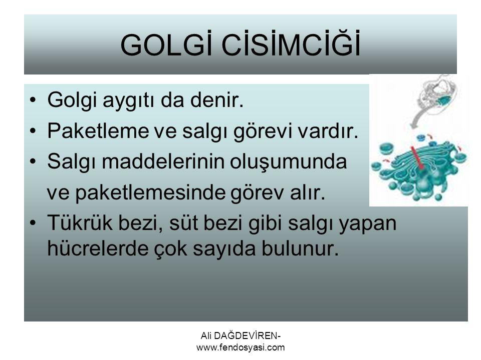 Ali DAĞDEVİREN- www.fendosyasi.com GOLGİ CİSİMCİĞİ Golgi aygıtı da denir. Paketleme ve salgı görevi vardır. Salgı maddelerinin oluşumunda ve paketleme