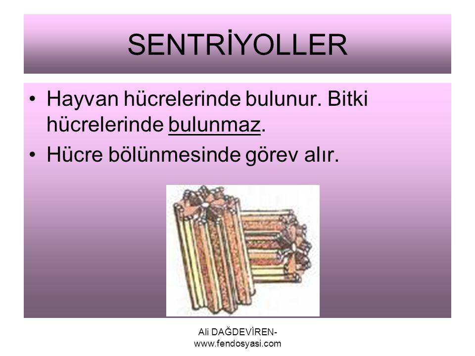 Ali DAĞDEVİREN- www.fendosyasi.com SENTRİYOLLER Hayvan hücrelerinde bulunur. Bitki hücrelerinde bulunmaz. Hücre bölünmesinde görev alır.