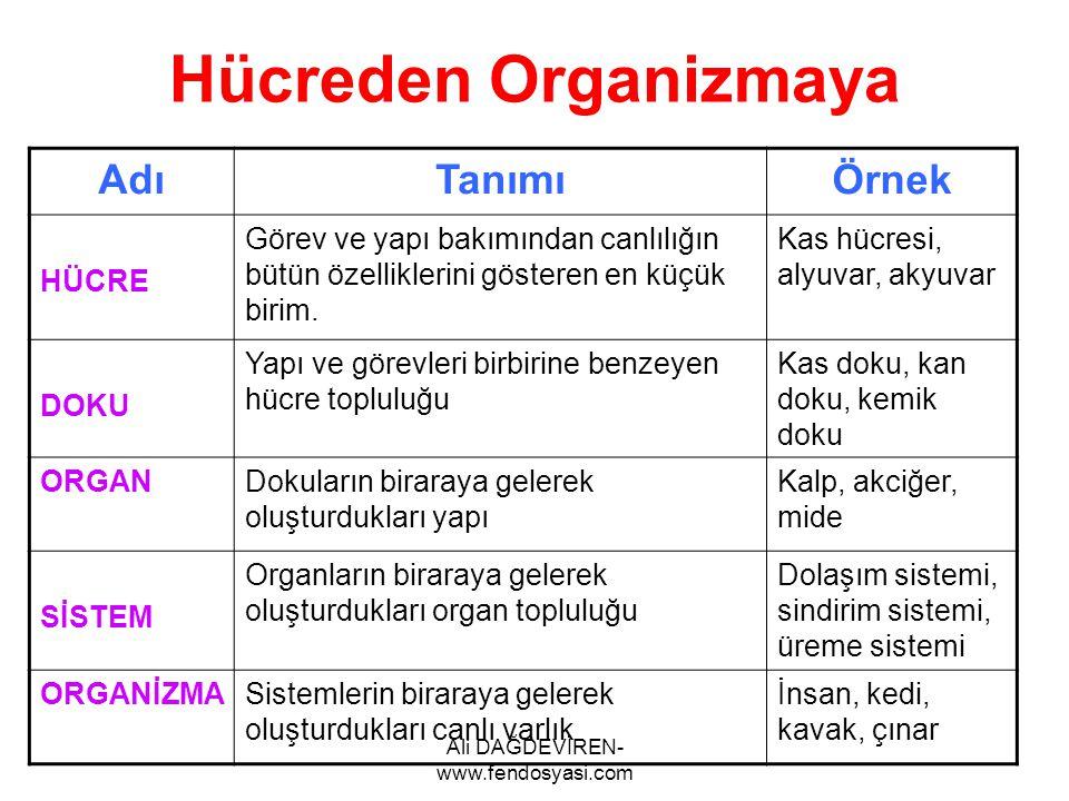 Ali DAĞDEVİREN- www.fendosyasi.com Hücreden Organizmaya AdıTanımıÖrnek HÜCRE Görev ve yapı bakımından canlılığın bütün özelliklerini gösteren en küçük
