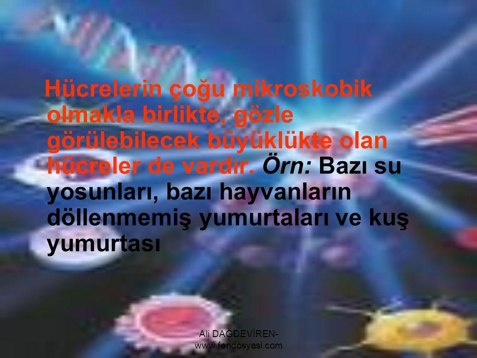 Ali DAĞDEVİREN- www.fendosyasi.com Hücrelerin çoğu mikroskobik olmakla birlikte, gözle görülebilecek büyüklükte olan hücreler de vardır. Örn: Bazı su