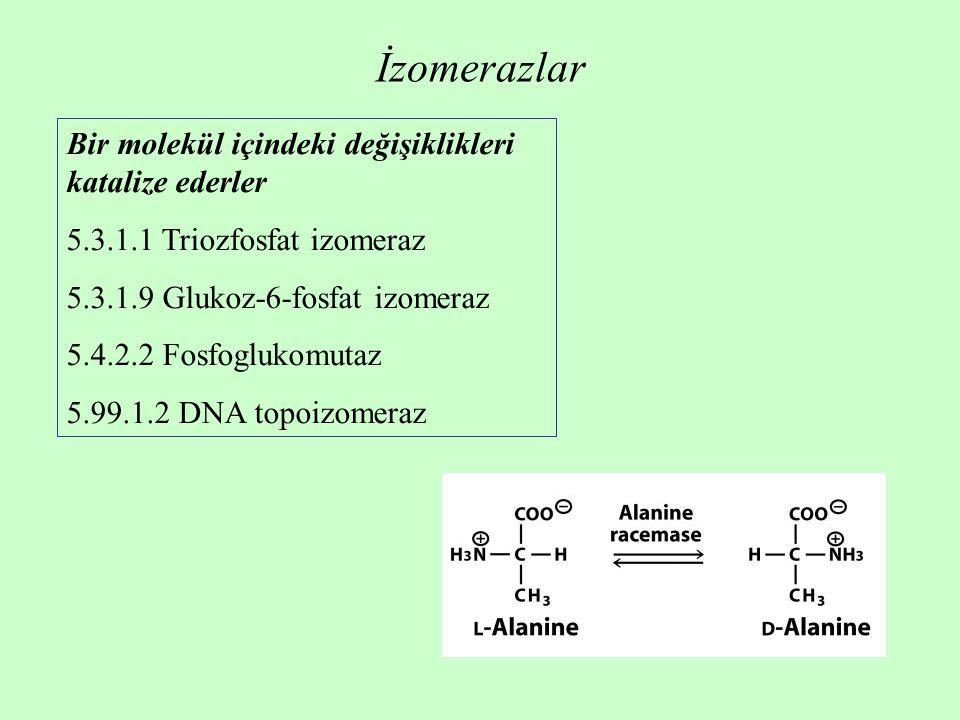 İzomerazlar Bir molekül içindeki değişiklikleri katalize ederler 5.3.1.1 Triozfosfat izomeraz 5.3.1.9 Glukoz-6-fosfat izomeraz 5.4.2.2 Fosfoglukomutaz 5.99.1.2 DNA topoizomeraz