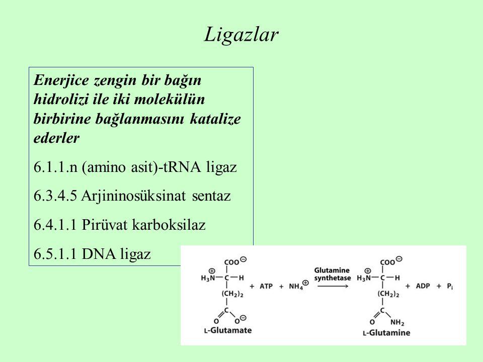 Ligazlar Enerjice zengin bir bağın hidrolizi ile iki molekülün birbirine bağlanmasını katalize ederler 6.1.1.n (amino asit)-tRNA ligaz 6.3.4.5 Arjininosüksinat sentaz 6.4.1.1 Pirüvat karboksilaz 6.5.1.1 DNA ligaz