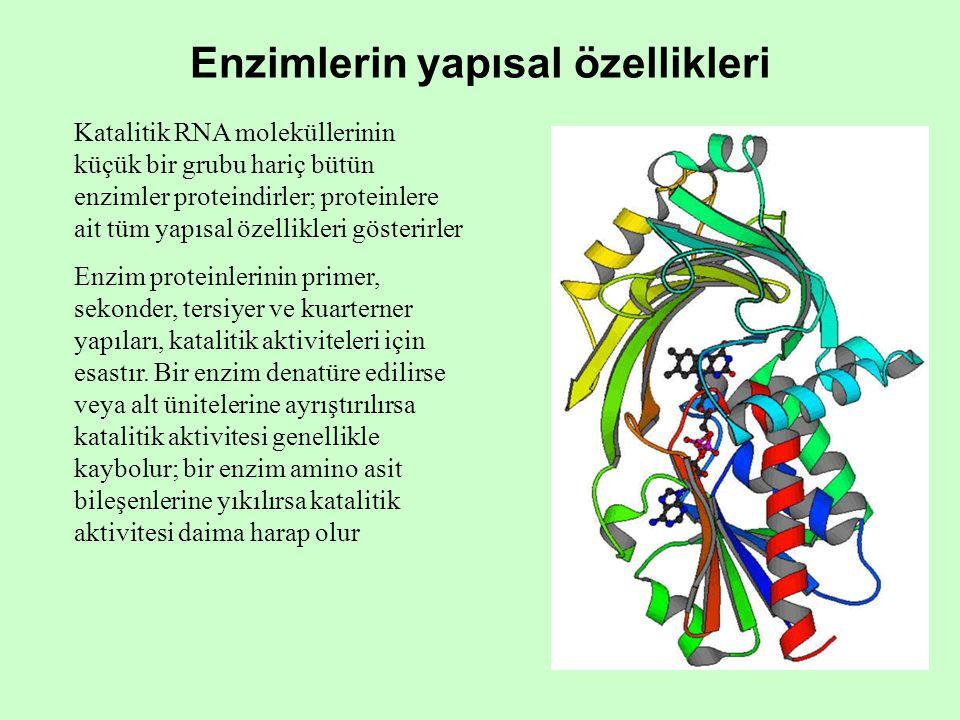 Enzimlerin yapısal özellikleri Katalitik RNA moleküllerinin küçük bir grubu hariç bütün enzimler proteindirler; proteinlere ait tüm yapısal özellikleri gösterirler Enzim proteinlerinin primer, sekonder, tersiyer ve kuarterner yapıları, katalitik aktiviteleri için esastır.