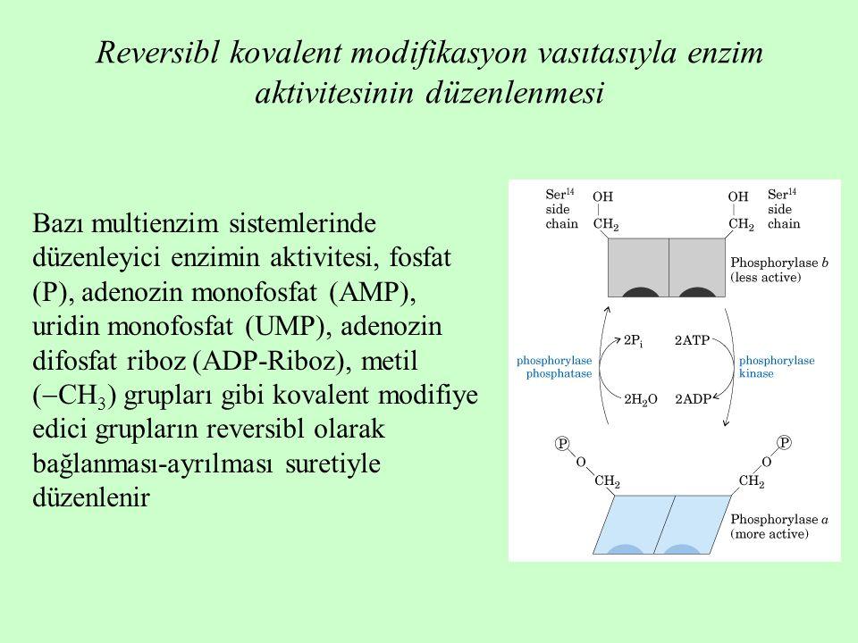Reversibl kovalent modifikasyon vasıtasıyla enzim aktivitesinin düzenlenmesi Bazı multienzim sistemlerinde düzenleyici enzimin aktivitesi, fosfat (P), adenozin monofosfat (AMP), uridin monofosfat (UMP), adenozin difosfat riboz (ADP-Riboz), metil (  CH 3 ) grupları gibi kovalent modifiye edici grupların reversibl olarak bağlanması-ayrılması suretiyle düzenlenir
