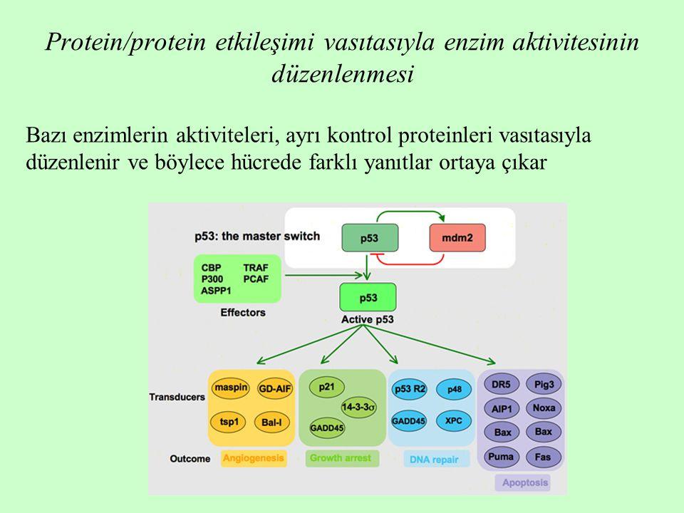 Protein/protein etkileşimi vasıtasıyla enzim aktivitesinin düzenlenmesi Bazı enzimlerin aktiviteleri, ayrı kontrol proteinleri vasıtasıyla düzenlenir ve böylece hücrede farklı yanıtlar ortaya çıkar