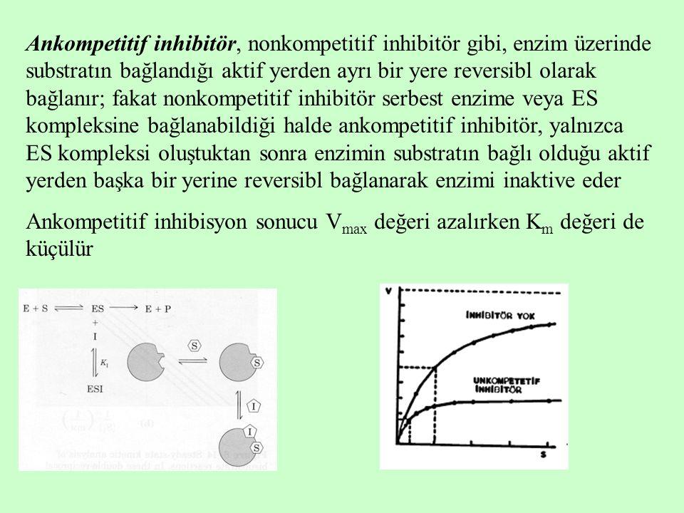 Ankompetitif inhibitör, nonkompetitif inhibitör gibi, enzim üzerinde substratın bağlandığı aktif yerden ayrı bir yere reversibl olarak bağlanır; fakat nonkompetitif inhibitör serbest enzime veya ES kompleksine bağlanabildiği halde ankompetitif inhibitör, yalnızca ES kompleksi oluştuktan sonra enzimin substratın bağlı olduğu aktif yerden başka bir yerine reversibl bağlanarak enzimi inaktive eder Ankompetitif inhibisyon sonucu V max değeri azalırken K m değeri de küçülür