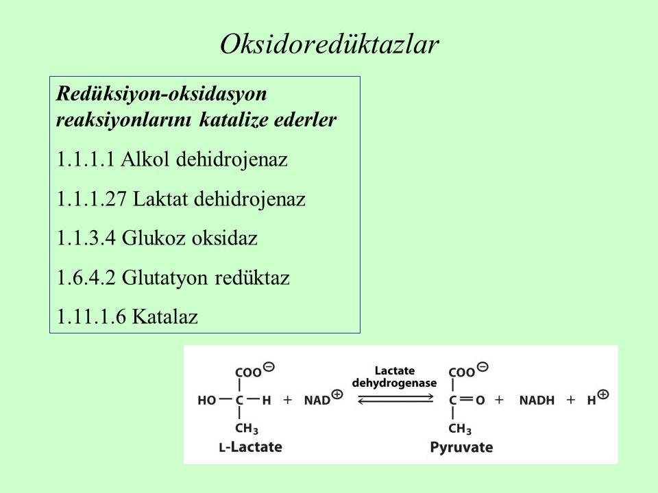 Oksidoredüktazlar Redüksiyon-oksidasyon reaksiyonlarını katalize ederler 1.1.1.1 Alkol dehidrojenaz 1.1.1.27 Laktat dehidrojenaz 1.1.3.4 Glukoz oksidaz 1.6.4.2 Glutatyon redüktaz 1.11.1.6 Katalaz