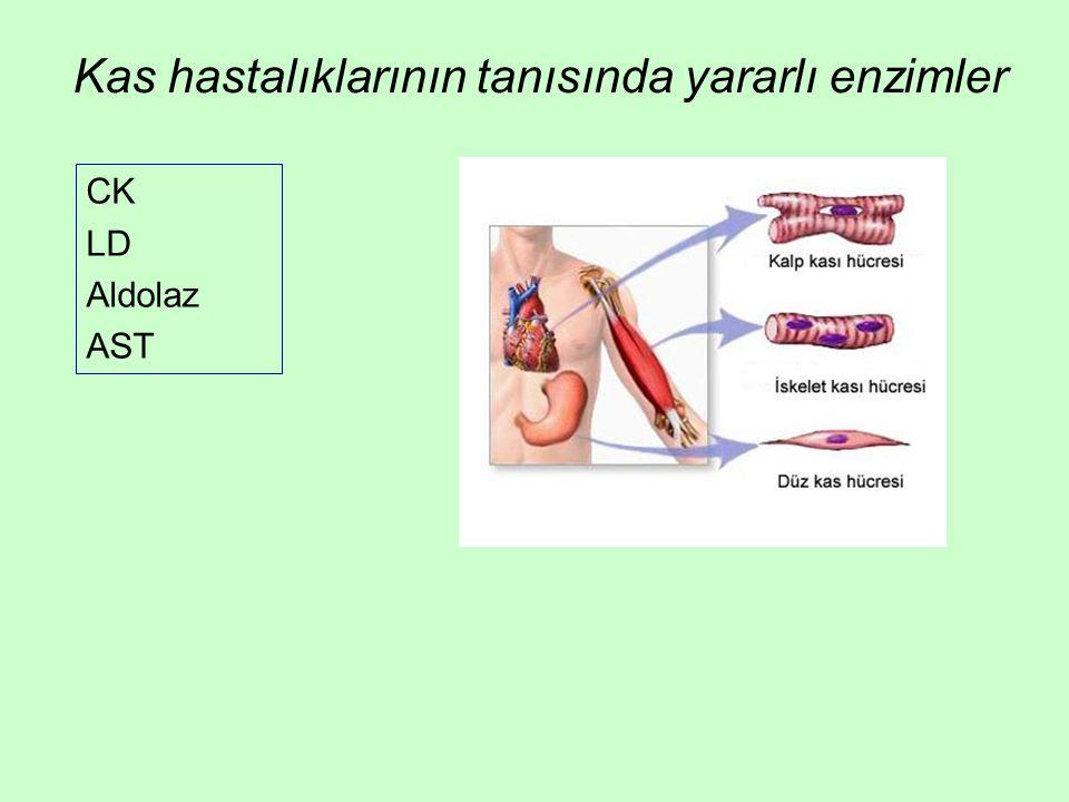 Kas hastalıklarının tanısında yararlı enzimler CK LD Aldolaz AST