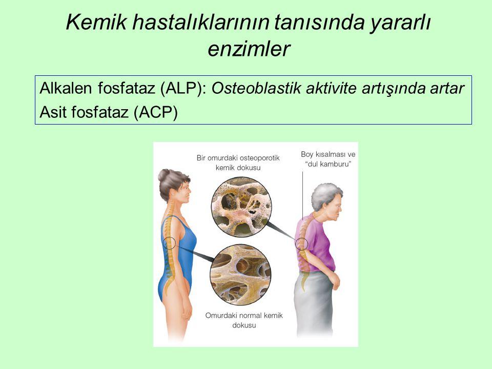 Kemik hastalıklarının tanısında yararlı enzimler Alkalen fosfataz (ALP): Osteoblastik aktivite artışında artar Asit fosfataz (ACP)