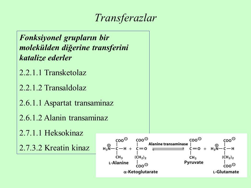 Transferazlar Fonksiyonel grupların bir molekülden diğerine transferini katalize ederler 2.2.1.1 Transketolaz 2.2.1.2 Transaldolaz 2.6.1.1 Aspartat transaminaz 2.6.1.2 Alanin transaminaz 2.7.1.1 Heksokinaz 2.7.3.2 Kreatin kinaz