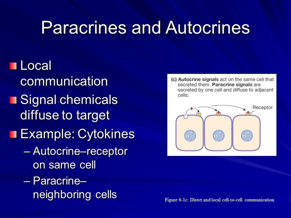 Paracrines and Autocrines Local communication Signal chemicals diffuse to target Example: Cytokines –Autocrine–receptor on same cell –Paracrine– neigh