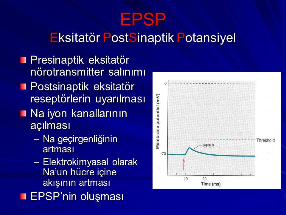 EPSP Eksitatör PostSinaptik Potansiyel Presinaptik eksitatör nörotransmitter salınımı Postsinaptik eksitatör reseptörlerin uyarılması Na iyon kanallarının açılması –Na geçirgenliğinin artması –Elektrokimyasal olarak Na'un hücre içine akışının artması EPSP'nin oluşması