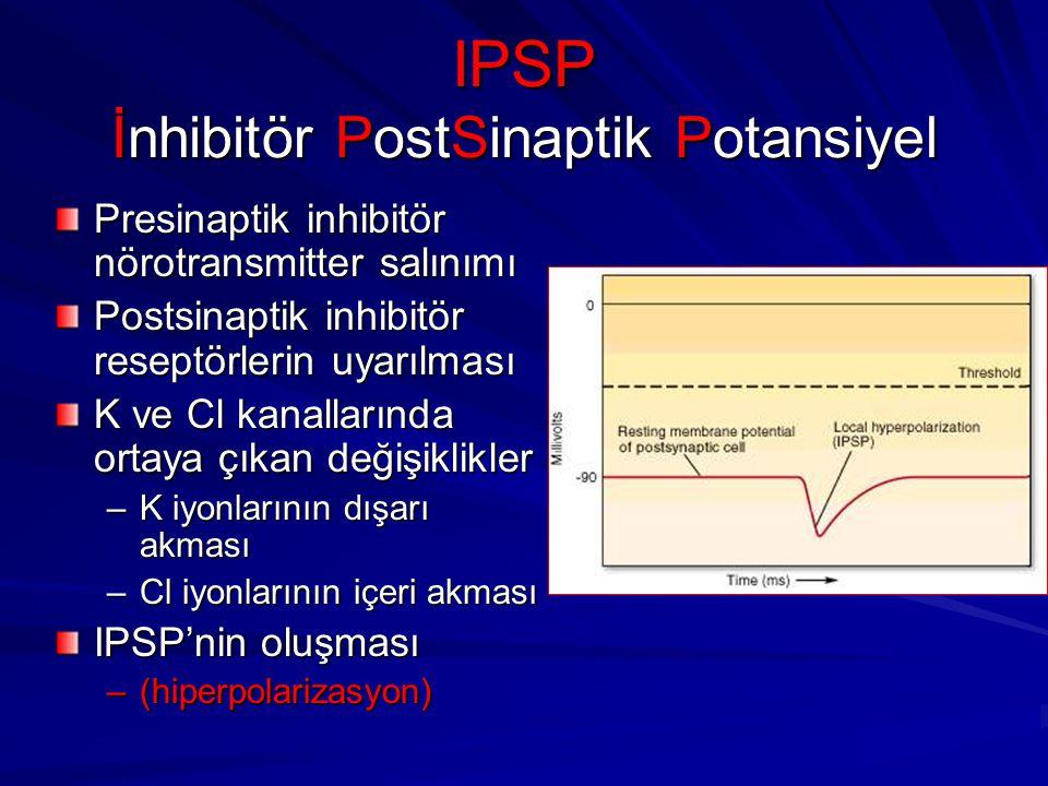 IPSP İnhibitör PostSinaptik Potansiyel Presinaptik inhibitör nörotransmitter salınımı Postsinaptik inhibitör reseptörlerin uyarılması K ve Cl kanallarında ortaya çıkan değişiklikler –K iyonlarının dışarı akması –Cl iyonlarının içeri akması IPSP'nin oluşması –(hiperpolarizasyon)