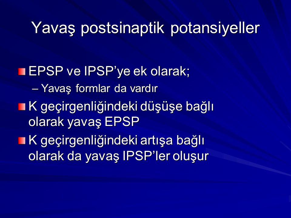 Yavaş postsinaptik potansiyeller EPSP ve IPSP'ye ek olarak; –Yavaş formlar da vardır K geçirgenliğindeki düşüşe bağlı olarak yavaş EPSP K geçirgenliğindeki artışa bağlı olarak da yavaş IPSP'ler oluşur