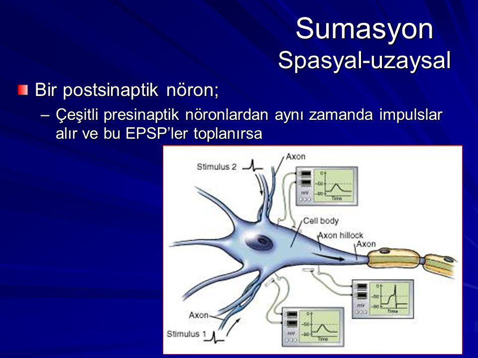Sumasyon Spasyal-uzaysal Bir postsinaptik nöron; –Çeşitli presinaptik nöronlardan aynı zamanda impulslar alır ve bu EPSP'ler toplanırsa
