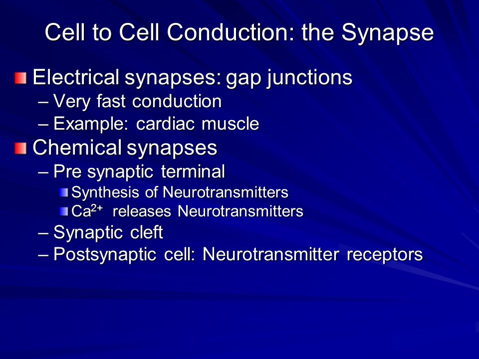 Cell to Cell Conduction: the Synapse Electrical synapses: gap junctions –Very fast conduction –Example: cardiac muscle Chemical synapses –Pre synaptic