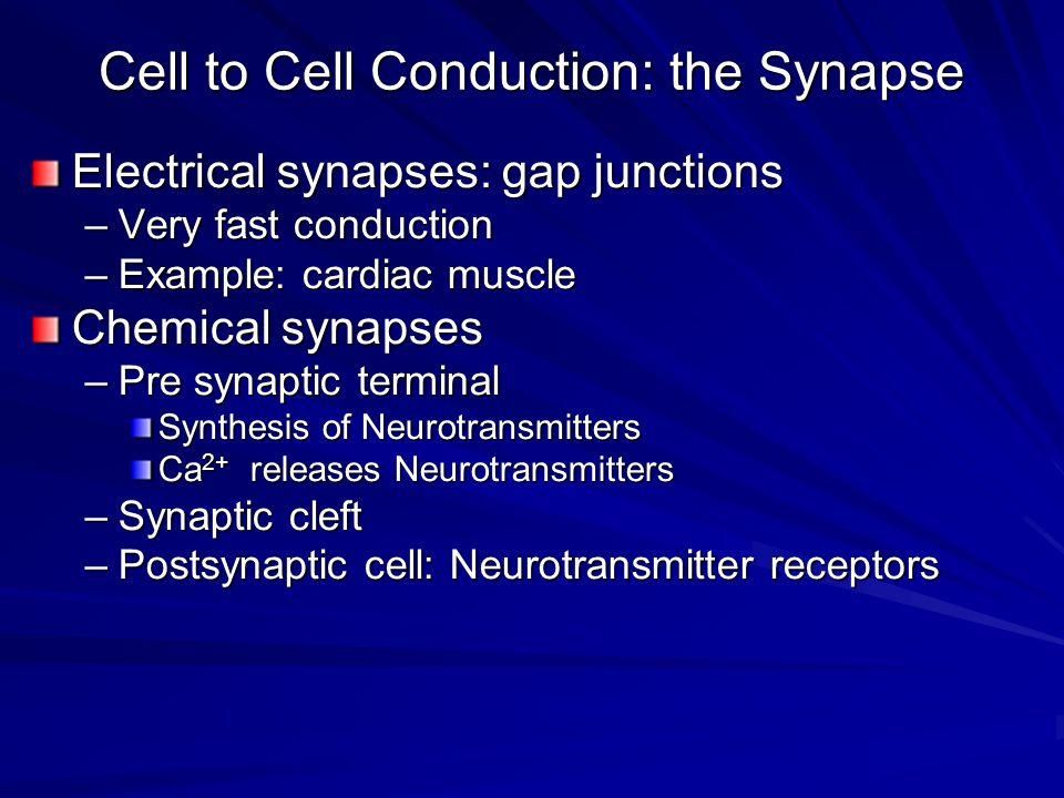 sinapslarda inhibisyon 1.Direkt inhibisyon; –Bir IPSP tarafından nöronda meydana getirilen inhibisyondur –Postsinaptik deşarj olmadan gerçekleşir 2.İndirek inhibisyon; –Nöronda AP oluştuktan sonra oluşan inhibisyondur –Refrakter periyod, ard hiperpolarizasyon döneminde nöron indirekt olarak inhibe durumdadır