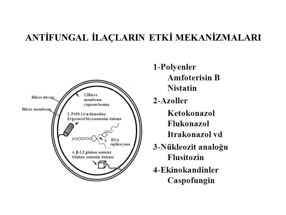 ANTİFUNGAL İLAÇLARIN ETKİ MEKANİZMALARI Hücre duvarı Hücre membranı 1.Hücre membranı yapısını bozma 2. P450 14-  demetilaz Ergosterol biyosentezini ö