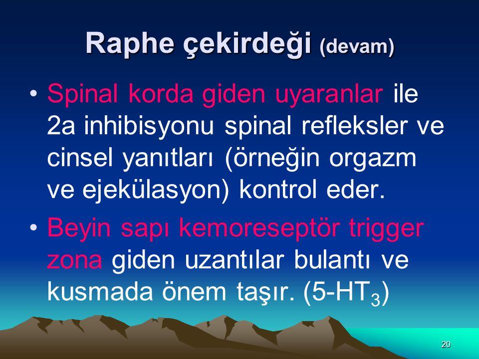 20 Raphe çekirdeği (devam) Spinal korda giden uyaranlar ile 2a inhibisyonu spinal refleksler ve cinsel yanıtları (örneğin orgazm ve ejekülasyon) kontrol eder.