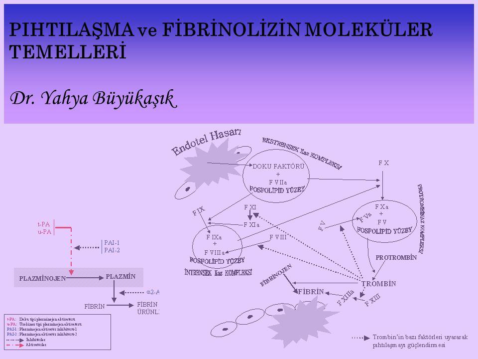 PIHTILAŞMA ve FİBRİNOLİZİN MOLEKÜLER TEMELLERİ Dr. Yahya Büyükaşık