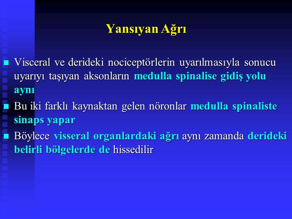 Yansıyan Ağrı Visceral ve derideki nociceptörlerin uyarılmasıyla sonucu uyarıyı taşıyan aksonların medulla spinalise gidiş yolu aynı Visceral ve derideki nociceptörlerin uyarılmasıyla sonucu uyarıyı taşıyan aksonların medulla spinalise gidiş yolu aynı Bu iki farklı kaynaktan gelen nöronlar medulla spinaliste sinaps yapar Bu iki farklı kaynaktan gelen nöronlar medulla spinaliste sinaps yapar Böylece visseral organlardaki ağrı aynı zamanda derideki belirli bölgelerde de hissedilir Böylece visseral organlardaki ağrı aynı zamanda derideki belirli bölgelerde de hissedilir