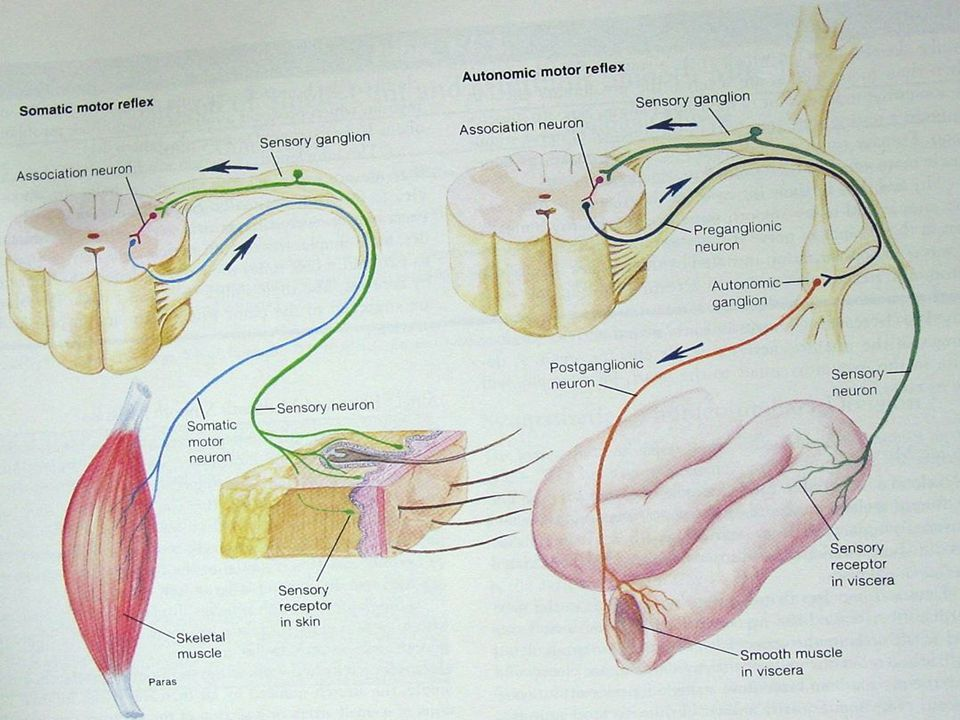 Viscero-cutaneal ve Cutaneal Viseral Reflekler ile Akupunktur Noktaları St 12 noktası mide'nin Front-Mu noktası, mide motilite bozukluklarında bu nokta hassas ve ağrılı St 12 noktası mide'nin Front-Mu noktası, mide motilite bozukluklarında bu nokta hassas ve ağrılı Ren 3 noktası mesane'nin Front-Mu noktası, mesane hipotoni'sinde hasas ve ağrılı Ren 3 noktası mesane'nin Front-Mu noktası, mesane hipotoni'sinde hasas ve ağrılı St 25 noktası kalın barsağın Front-Mu noktası, barsak motilitesinin azaldığı durumda hassas ve ağrılı St 25 noktası kalın barsağın Front-Mu noktası, barsak motilitesinin azaldığı durumda hassas ve ağrılı