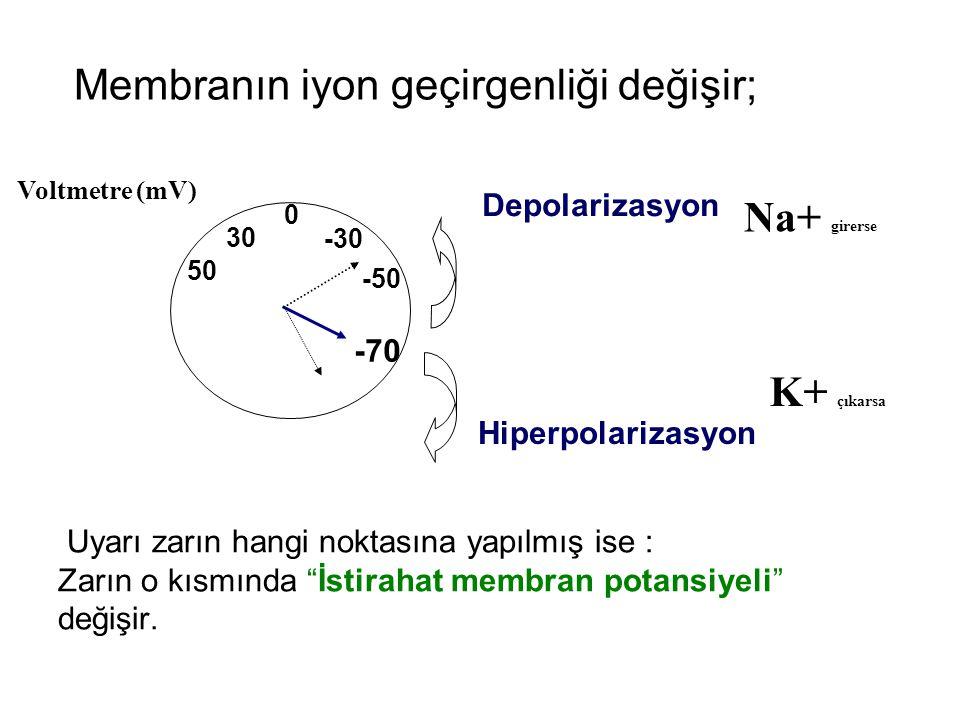 İstirahat membran potansiyelindeki değişmeye Lokal Potansiyel denir.