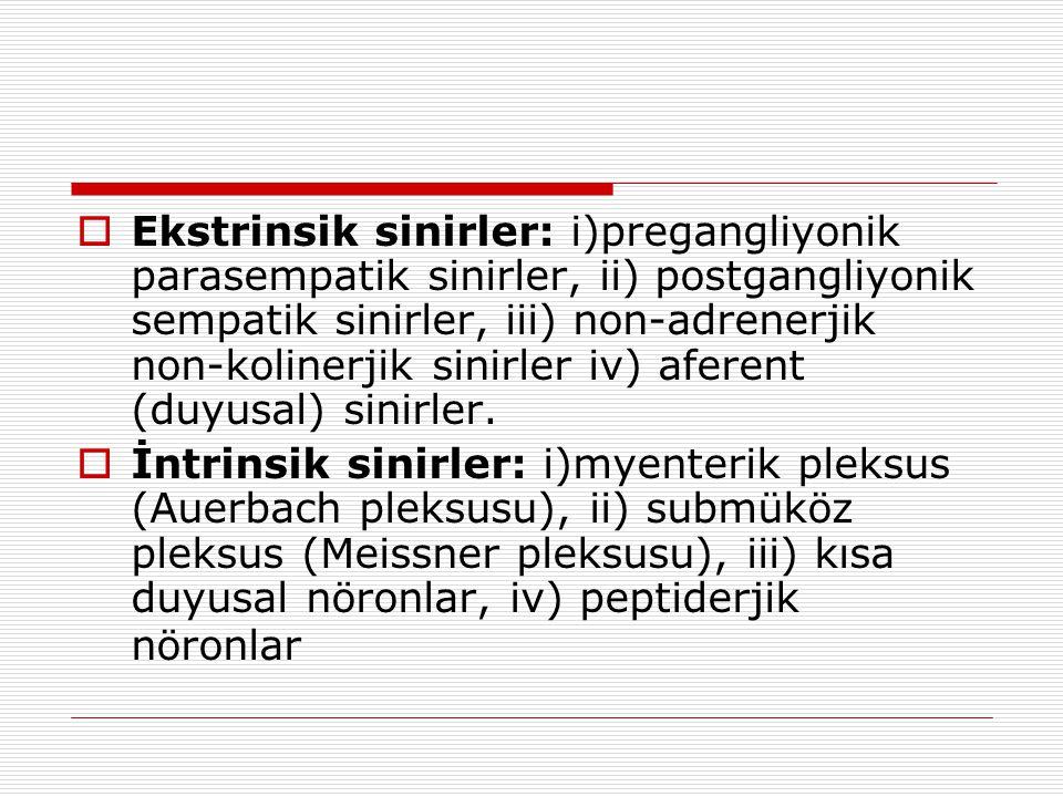  Ekstrinsik sinirler: i)pregangliyonik parasempatik sinirler, ii) postgangliyonik sempatik sinirler, iii) non-adrenerjik non-kolinerjik sinirler iv)