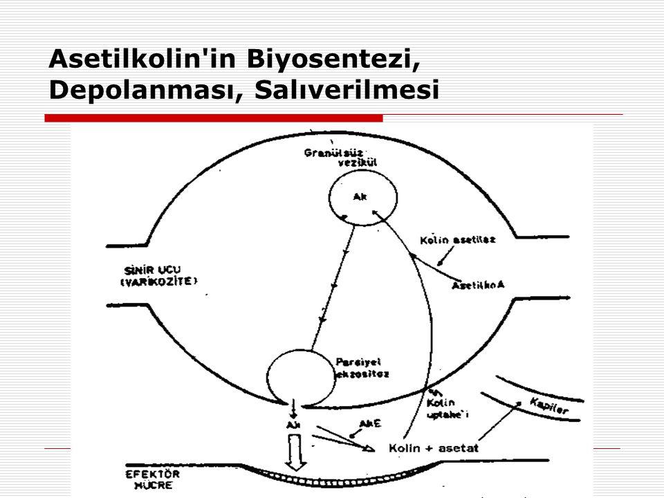 Asetilkolin'in Biyosentezi, Depolanması, Salıverilmesi