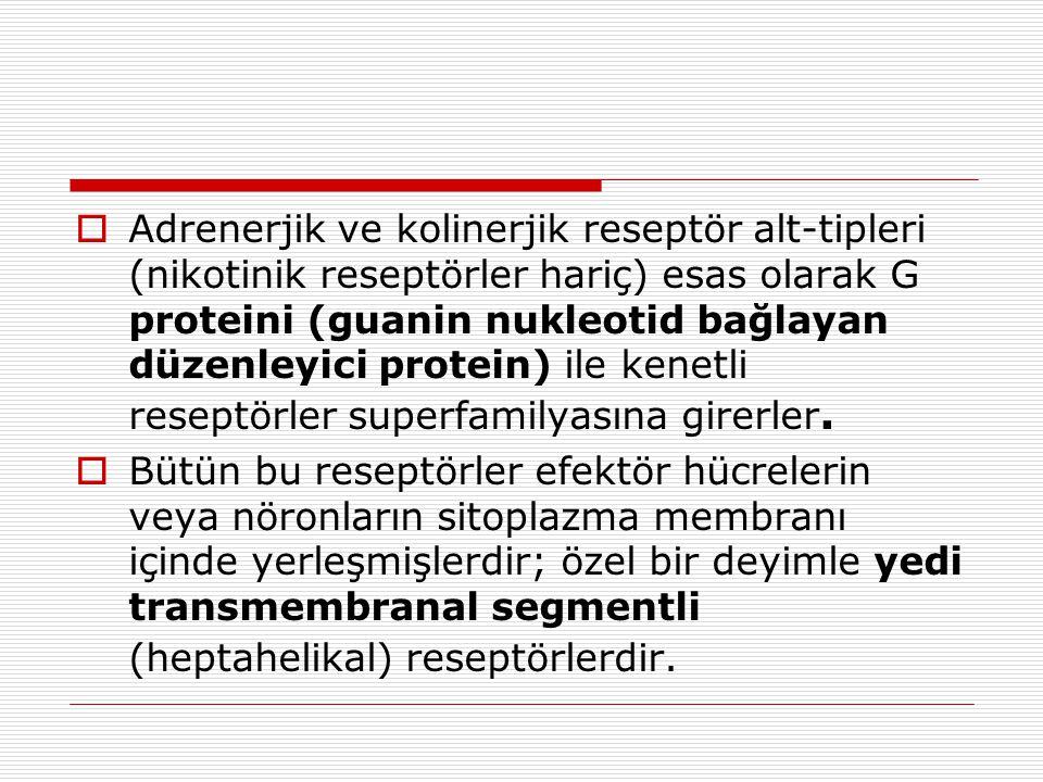  Adrenerjik ve kolinerjik reseptör alt-tipleri (nikotinik reseptörler hariç) esas olarak G proteini (guanin nukleotid bağlayan düzenleyici protein) ile kenetli reseptörler superfamilyasına girerler.