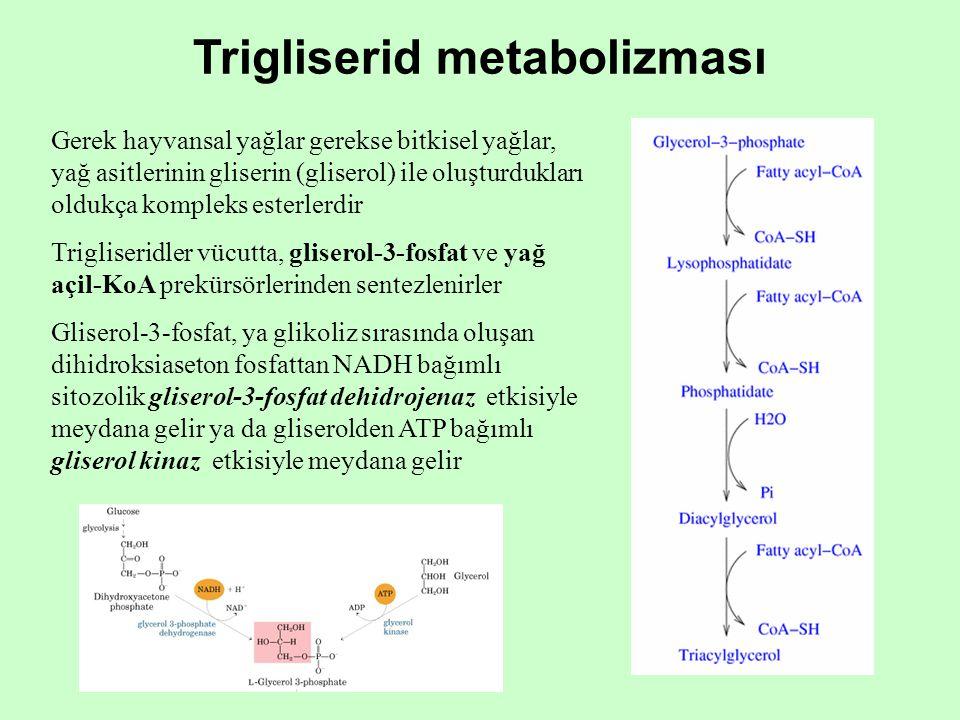 Trigliserid metabolizması Gerek hayvansal yağlar gerekse bitkisel yağlar, yağ asitlerinin gliserin (gliserol) ile oluşturdukları oldukça kompleks este