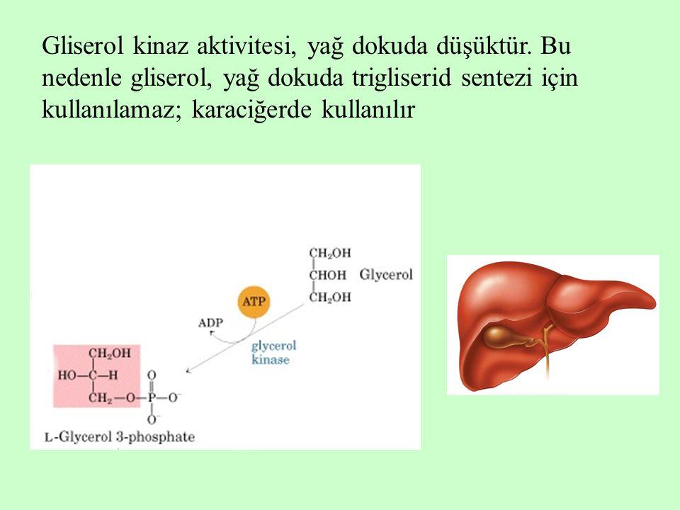 Gliserol kinaz aktivitesi, yağ dokuda düşüktür. Bu nedenle gliserol, yağ dokuda trigliserid sentezi için kullanılamaz; karaciğerde kullanılır