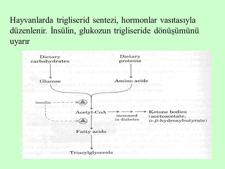 Hayvanlarda trigliserid sentezi, hormonlar vasıtasıyla düzenlenir. İnsülin, glukozun trigliseride dönüşümünü uyarır