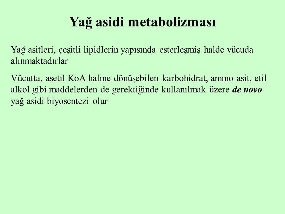 Yağ asidi metabolizması Yağ asitleri, çeşitli lipidlerin yapısında esterleşmiş halde vücuda alınmaktadırlar Vücutta, asetil KoA haline dönüşebilen kar