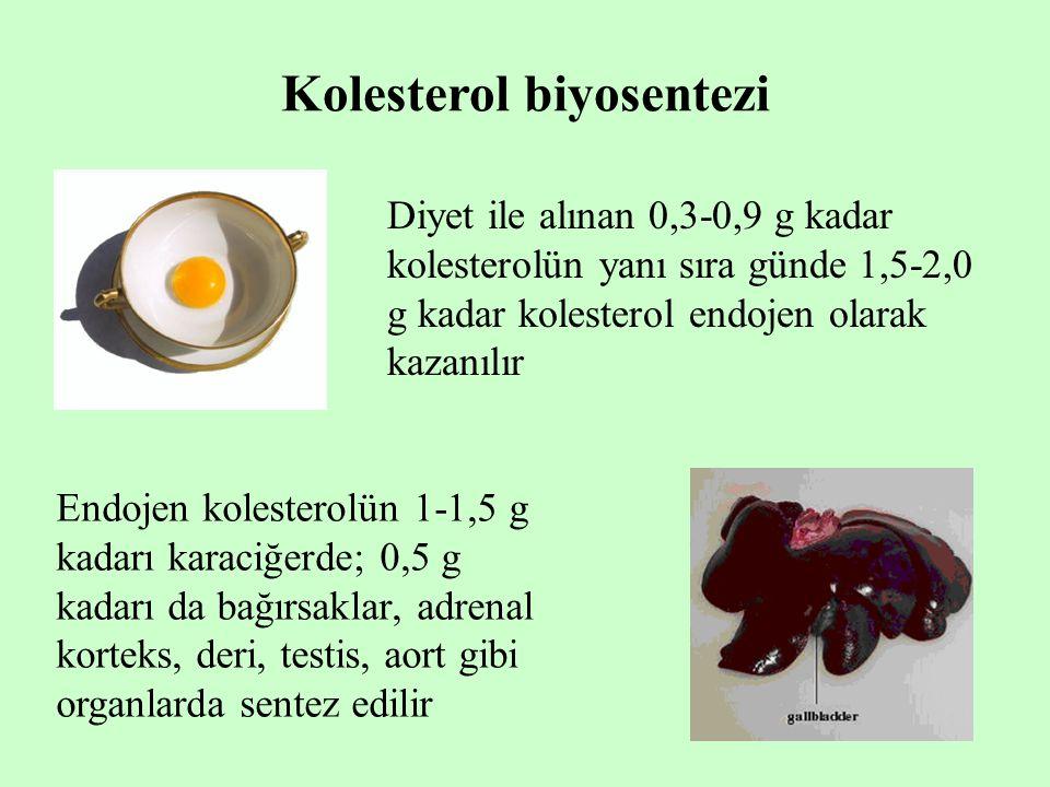 Kolesterol biyosentezi Diyet ile alınan 0,3-0,9 g kadar kolesterolün yanı sıra günde 1,5-2,0 g kadar kolesterol endojen olarak kazanılır Endojen koles