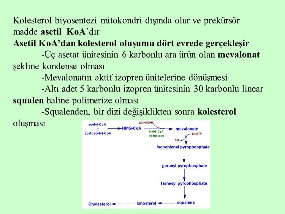 Kolesterol biyosentezi mitokondri dışında olur ve prekürsör madde asetil KoA'dır Asetil KoA'dan kolesterol oluşumu dört evrede gerçekleşir -Üç asetat
