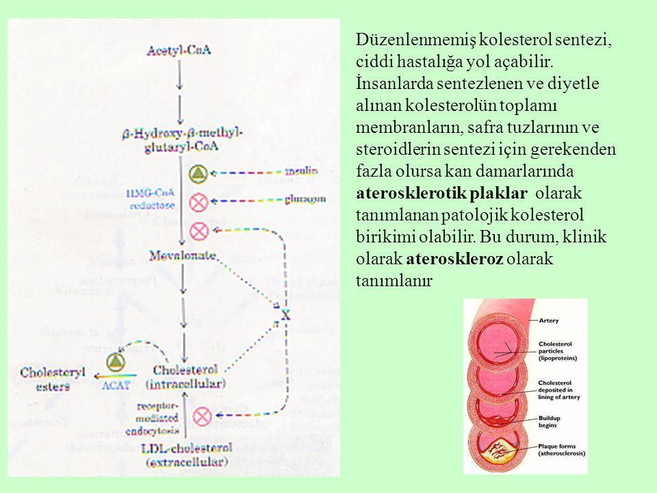 Düzenlenmemiş kolesterol sentezi, ciddi hastalığa yol açabilir. İnsanlarda sentezlenen ve diyetle alınan kolesterolün toplamı membranların, safra tuzl