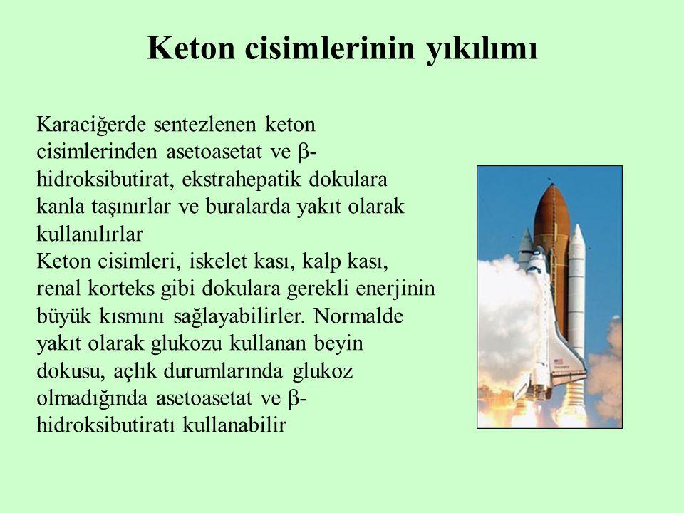 Keton cisimlerinin yıkılımı Karaciğerde sentezlenen keton cisimlerinden asetoasetat ve  - hidroksibutirat, ekstrahepatik dokulara kanla taşınırlar ve